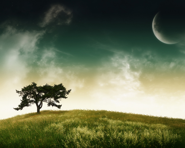 Serenity_Tree_by_nuaHs